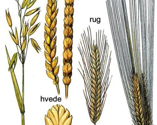 Historien bag vores dyrkningsmetode