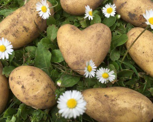 Historien bag vores grøntsager