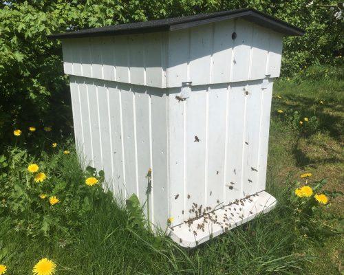 Historien bag vores honning